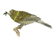 Sketch of bird Stock Photo