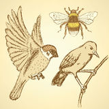 Sketch birds and bee in vintage style Stock Images