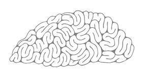 A sketch of the brain. Royalty Free Stock Photos