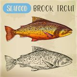 Sketch of brook trout or squaretail. Seafood, fish. Sketch of eastern brook or speckled, charr or mud trout. Hand drawn squaretail. Seafood, fish for market Stock Photos