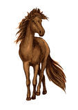 Sketch of brown horse with bay arabian stallion Stock Image