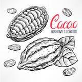 Sketch cacao beans Royalty Free Stock Photos