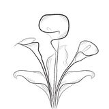 Sketch with calla. Fully editable decorative  illustration (easy editing Stock Image