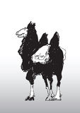 Sketch of a Camel with Saddle Stock Photos