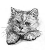 Sketch cat. Head on paper Stock Photo