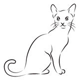 Sketch of a cat. Isolated on white Stock Photos