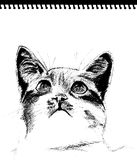 Sketch - cat stock images