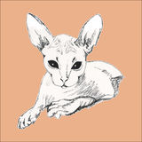 Sketch cat Sphinx. Drawing by hand vintage. Royalty Free Stock Images