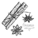 Sketch cinnamon. Isolated on white background . Kitchen herbs and natural spices. Vintage  illustration Royalty Free Stock Image