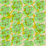 Sketch clover, vector  seamless pattern, saint Patrick day symbo Stock Image
