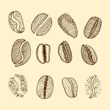 Sketch of coffee beans. vector drawing Royalty Free Stock Photo