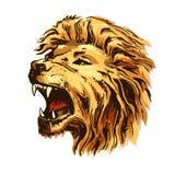 Sketch color vector lion head royalty free illustration