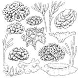 Sketch of  corals  set Royalty Free Stock Photo