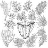 Sketch of  corals  set Stock Photos