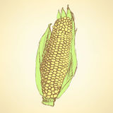 Sketch corn cob in vintage style Stock Photo
