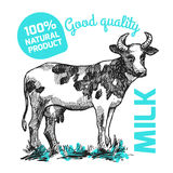 Sketch of cow Royalty Free Stock Images