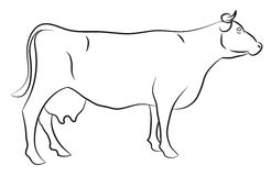 Sketch of a Cow. Isolated on white Stock Photos
