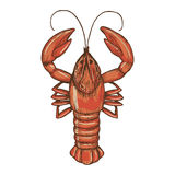 Sketch of crayfish Royalty Free Stock Images