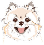 Sketch of cute spitz dog Royalty Free Stock Image