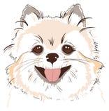 Sketch of cute spitz dog vector illustration