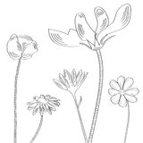 Sketch with decorative flowers. Fully editable decorative  illustration (easy editing Stock Photos
