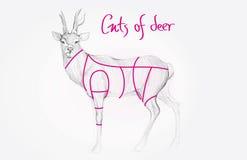 Sketch of deer Stock Images