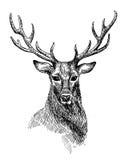 Sketch of deer. Hand drawn illustration deer. Sketch of deer. Black and white isolated deer Stock Image