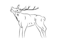 Sketch of a deer Royalty Free Stock Image