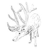 Sketch deer Royalty Free Stock Photography