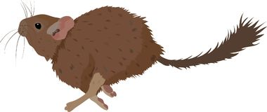 Sketch of Degu rodent pet. Vector Illustration Stock Image