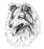 Sketch of Dog Ð¡ollie. Vector Illustration on white background stock illustration