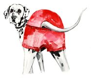 Sketch dog dalmatian watercolor illustration royalty free illustration