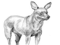 Sketch dog Miniature Pinscher. On paper Stock Photos