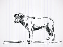 Sketch of dog Royalty Free Stock Photo
