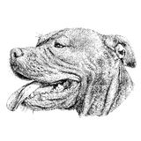 Sketch of Dog Pit bull terrier. Vector Illustration Stock Image