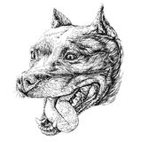 Sketch of Dog Staffordshire terrier. Vector Illustration. On white background Royalty Free Stock Images