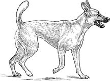 Sketch of a dog on a walk Stock Image