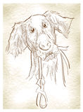 Sketch of dogs. Royalty Free Stock Images