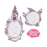 Sketch dragon fruit Royalty Free Stock Image