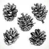 Sketch drawing pine cones Royalty Free Stock Images