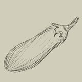 Sketch of an eggplant. Hand-drawn. EPS 8 Stock Photography