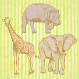 Sketch elepant, giraffe and hippo, vector background Royalty Free Stock Image