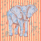 Sketch elepant, vector vintage background Stock Images
