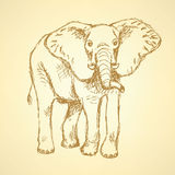 Sketch elepant,  vintage background Royalty Free Stock Photos