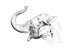 Sketch of elephant Stock Photos