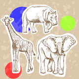 Sketch elephant, giraffe and hippo, vector background Royalty Free Stock Images