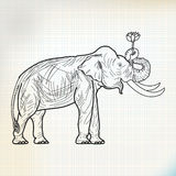 Sketch elephant Stand and Lotus Flower. On paper Royalty Free Stock Photo