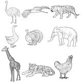 Sketch elephant, tiger, eagle, rooster, giraffe, ostrich, turkey, goose. chicken on a white background. Vector Stock Photo