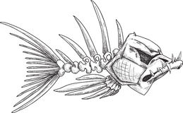 Sketch of evil skeleton fish with sharp teeth. Sketch of evil skeleton fish with sharp crooked teeth Stock Photos