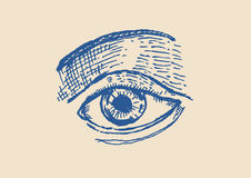 Sketch of An Eye and brows vector and jpg. Pen and Ink style Hand Sketch of An Eye and brows vector and jpg royalty free illustration